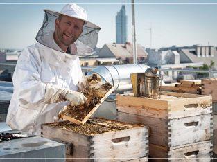 schlawiener honig – der frechste Honig Wiens!
