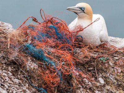 Wie kommt der Plastikmüll ins Meer?